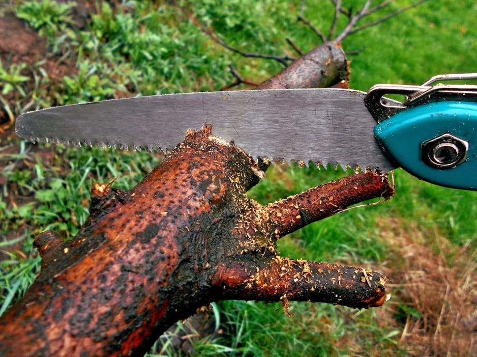 sawing tree branch